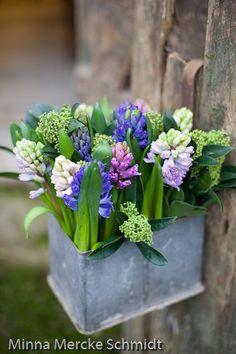<3  Hyacinth
