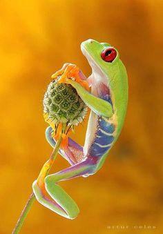 Funny Wildlife, funnywildlife: Pretty Frog!!!