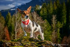 Alina Dogs, Pet Dogs, Dog, Doggies