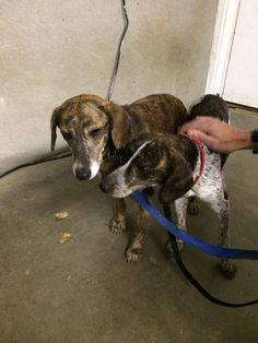 Kent, Connecticut Animal Control Page Liked · October 29 · Edited ·   **Update!** They are going home tomorrow!  These girls were found north of town earlier this evening. They may be hunting dogs. Please let me know if you recognize them!