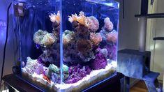 Reef Tank Lighting Best Lighting fro Coral Reef Aquariums (Buying Guide) Video Credit Reef Light T Aquarium Marin, Saltwater Aquarium Setup, Coral Reef Aquarium, Saltwater Fish Tanks, Aquarium Design, Marine Aquarium, Best Aquarium Fish, Marine Fish Tanks, Marine Tank