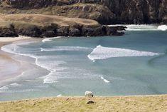 A grazing sheep in front of Valtos beach European Travel, Great Britain, Travel Photos, Sheep, Scotland, Coast, Beach, Water, Places