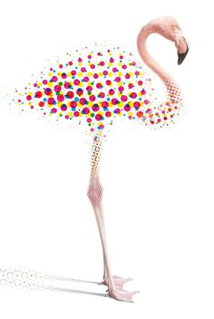 Flamand rose design graphique trame demi-teinte / Behance