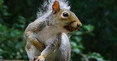 When It Comes To Retirement Savings, Are You A Ground Squirrel?