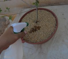 Diseñar un bonsái paso a paso - Cómo se riega - http://www.jardineriaon.com/disenar-un-bonsai-paso-a-paso-como-se-riega.html