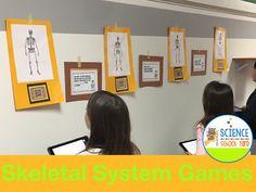 6 Skeletal System Game Ideas for Studying Bones!