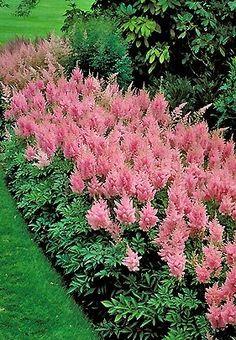 47 Best Plants Zone 9 Images Plants Plant Zones Garden Plants