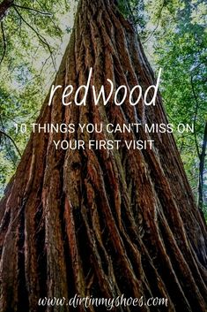 There are so many great things to do in the Redwoods! Camping, hiking, and wildlife spotting are some of my favorite things to do in the park. If you are planning a vacation, check out my favorite things to see and do on this list of things you can't miss on your next trip to Redwood National Park. Stuff To Do, Things To Do, Greatest Adventure, Trip Planning, State Parks, The Good Place, Favorite Things, Road Trip, National Parks