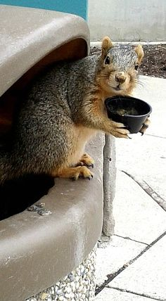 "Tiny Tim Squirrel says ""Please sir, can I have some more nuts""?"