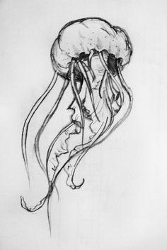 Jellyfish pencil drawing