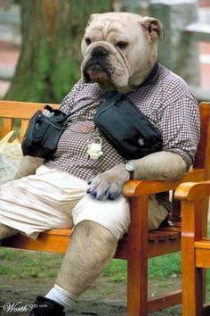 Dog wanwan.....チョットo。ひ。と。い。き。o おもしろ犬画像 : おもしろカワイイ犬の画像集 - NAVER まとめ