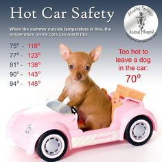 via Much Love Animal Rescue: LA is gearing up for it's first weekend of summer temps. in a long time. Good time for a refresher on heat safety for your pets! pinned with Pinvolve - pinvolve.co