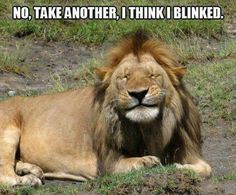 the funny animal pictures (68)