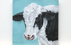 Cow Painting - Farm Animal Portrait - 12x12 Original Art on Canvas - Black and White Cow on Aqua