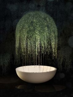 live moss air plant lighting   patrick nadeau