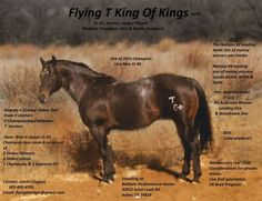 Flying T King of Kings  Special Leader X Won a Queen