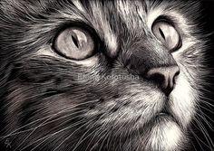 Cat's face - scratchboard art by Elena Kolotusha