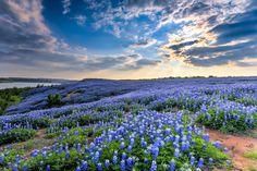 Wildflower Sunset at Muleshoe Bend (3)