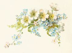 Antique Images: Free Flower Graphic: Vintage Illustration of White and Blue Flowers Bouquet