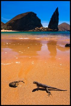 Galapagos Islands - Ecuador