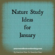 Beth shares some great nature study ideas for January!