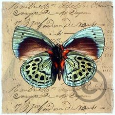 To sommerfugl-bilder - Epla