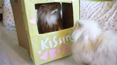 Kitty Kissing booth