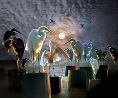 The Gathering of Birds a Composition with Egrets and Gulls by the Everglades National Park in Florida - a Surreal Bird Fantasy Photograph