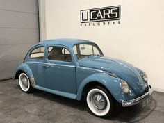 Beetle Bug, Vw Beetles, Vw Bugs, Import Cars, Simile, Vw Volkswagen, Cars And Motorcycles, Punch, Transportation