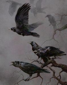 crow - corvi - piumaggio - piume - becco