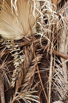 dry palm tree leaf detail - Google Search