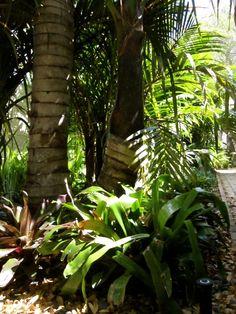 Landscape in the Florida yard