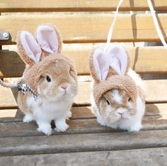 Discover the cutest hats for pet bunnies & rabbits at Bunny Supply Co! + FREE SHIPPING WORLDWIDE