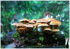 Google Image Result for http://www.designdune.com/wp-content/uploads/2012/05/Small-Mushroom-Village-520x367.jpg