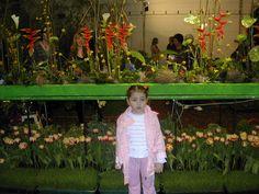 Blumenmesse 2011 Wels. Austria.
