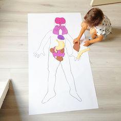 Thema lichaam ziek en gezond mijn lijf Key Stage 2, Human Body Organs, Classroom Posters, What To Make, Kindergarten Math, Homeschool, Kids Rugs, Science, Learning