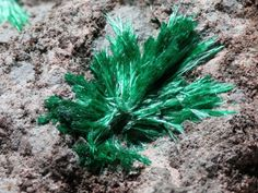 Cuprosklodowskite - rare green acicular crystals in vug.