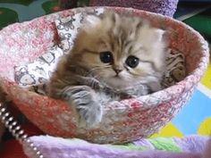 cutest kitten ever gif - Pesquisa Google
