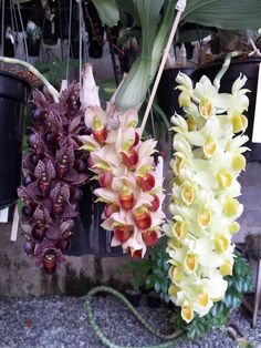 Catasetinae type orchids -  something so striking about this simple arrangement of three