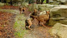 Réouverture du Parc zoologique de Paris le 12 avril !  En savoir plus…