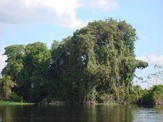 Parque Nacional Pacaás Novos, Rondônia