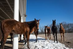 Stephen Got Even's filly with other foals checking out our photographer with curiosity