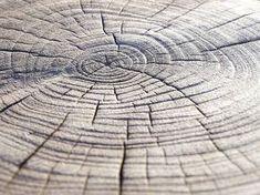 Ihr glaubt gar nicht wie gut sich das für die Finger anfühlt wenn man eine Baumscheibe so bearbeitet hat dass die Jahresringe so wunderbar sicht- und fühlbar werden. . Die #anleitung dazu gibt es #aktuellaufdemblog #direktlinkimprofil #easypeasyanklickbar und was man dann damit machen kann auch Aber pur mag ich sie auch . . . How to burn a tree stump and get this beautiful texture with annual tree rings #onmyblog #newblogpost #linkinprofile #linkinbio . . . #diy #doityourself #handmade…
