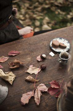 macarons & books {age old tree : ann whittaker} @Marte Marie Forsberg @Mercedes White