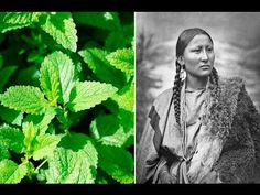 The Cherokee Indians believe that the Creator has given them medicinal herbs for natural healing. Their medicine is solely found in nature. These 10 medicinal plants have a long history of common u… Herbal Remedies, Home Remedies, Natural Remedies, Health Remedies, Native American Tribes, Native Americans, Throat Problems, Diabetic Breakfast, Herbs