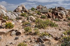 Richtersveld tour in Namaqualand by Pictures of scenery and geology information. Succulent Species, Travel Tours, Bouldering, Geology, South Africa, 4x4, Flora, Succulents, Landscapes