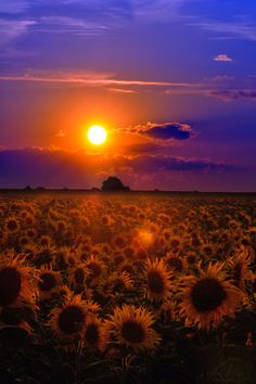 Natureland — heyfiki:   Wish you a restful sleep by tomsumartin