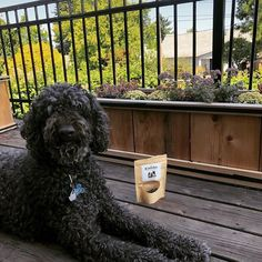 One of our fur buddies enjoying our #CBD dog treats! Looks like your treat bag is running low. Time to re-up! #CBDTreats #CBDForDogs #DogCBD #DogHealth #PetHealth. www.EmishaWellness.com Facts You Didnt Know, Treat Bags, Pet Health, Dog Treats, Fur, Running, Dogs, Community, Animals