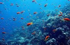Resultado de imagem para dentro do mar
