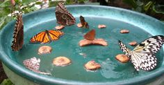 """According to a study published in the June 2003 issue of """"Conservation Biology,"""" there are 561 known butterfly species in the US and Canada, while there are only 56 ..."""